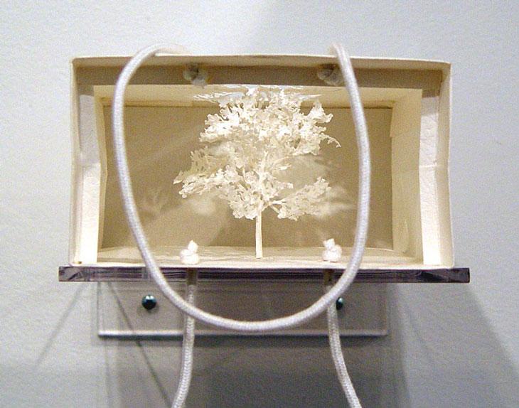 Boschi di carta, angolo di foresta